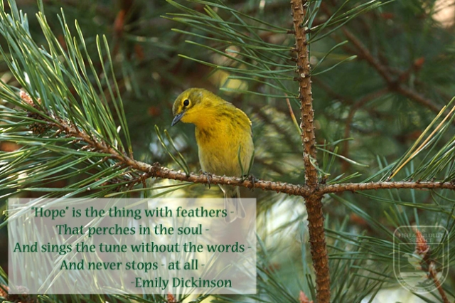 wednesday wisdom dickinson
