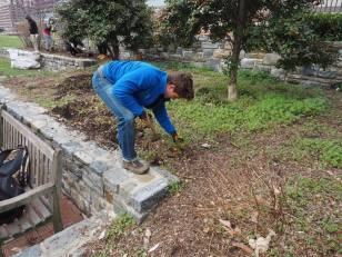 One of four SCA Crew leaders, Jeremy Taitano removing roots of invasive plants which have spread throughout the site