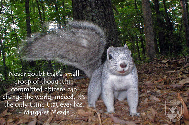 delmarva-fox-squirrel_WednesdayWisdomFeature