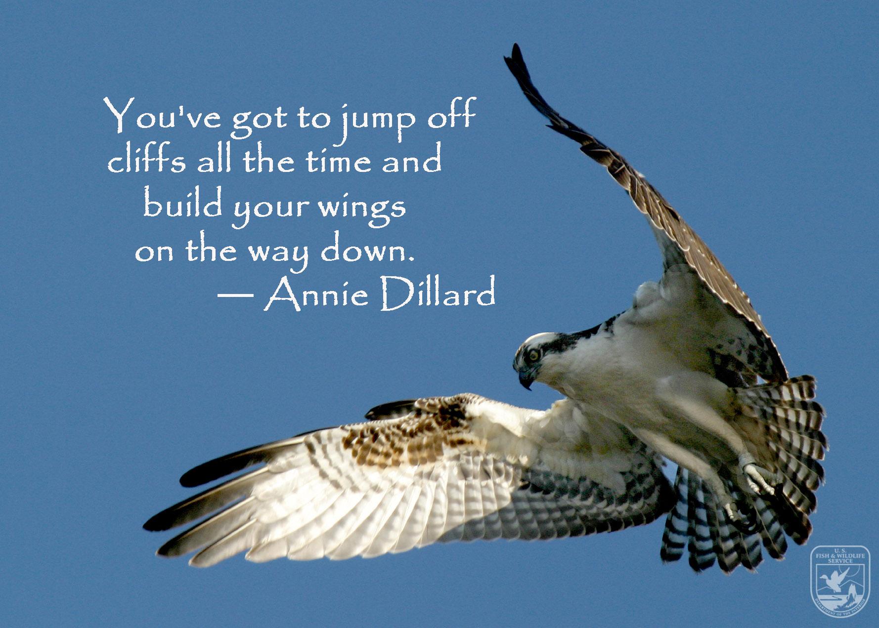 dillard-osprey-edit