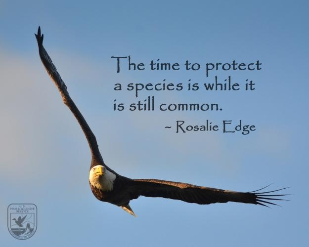 rosalie-eagle-ww