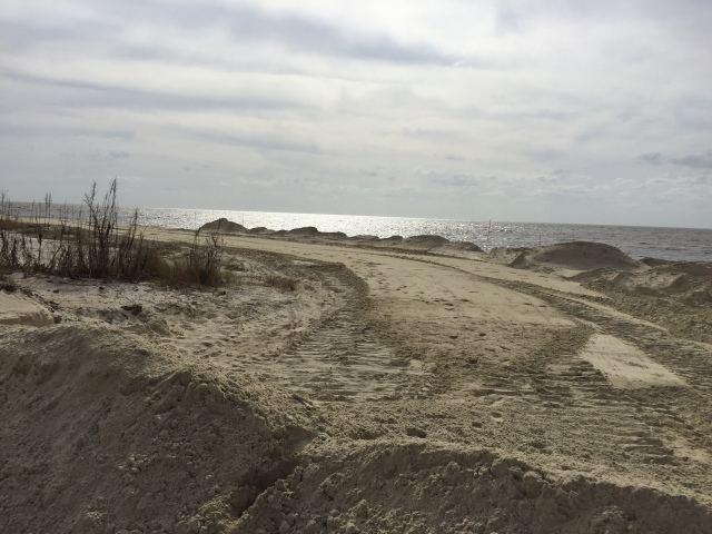 Restoring Cooks Beach in New Jersey Photo credit: Elizabeth Freiday