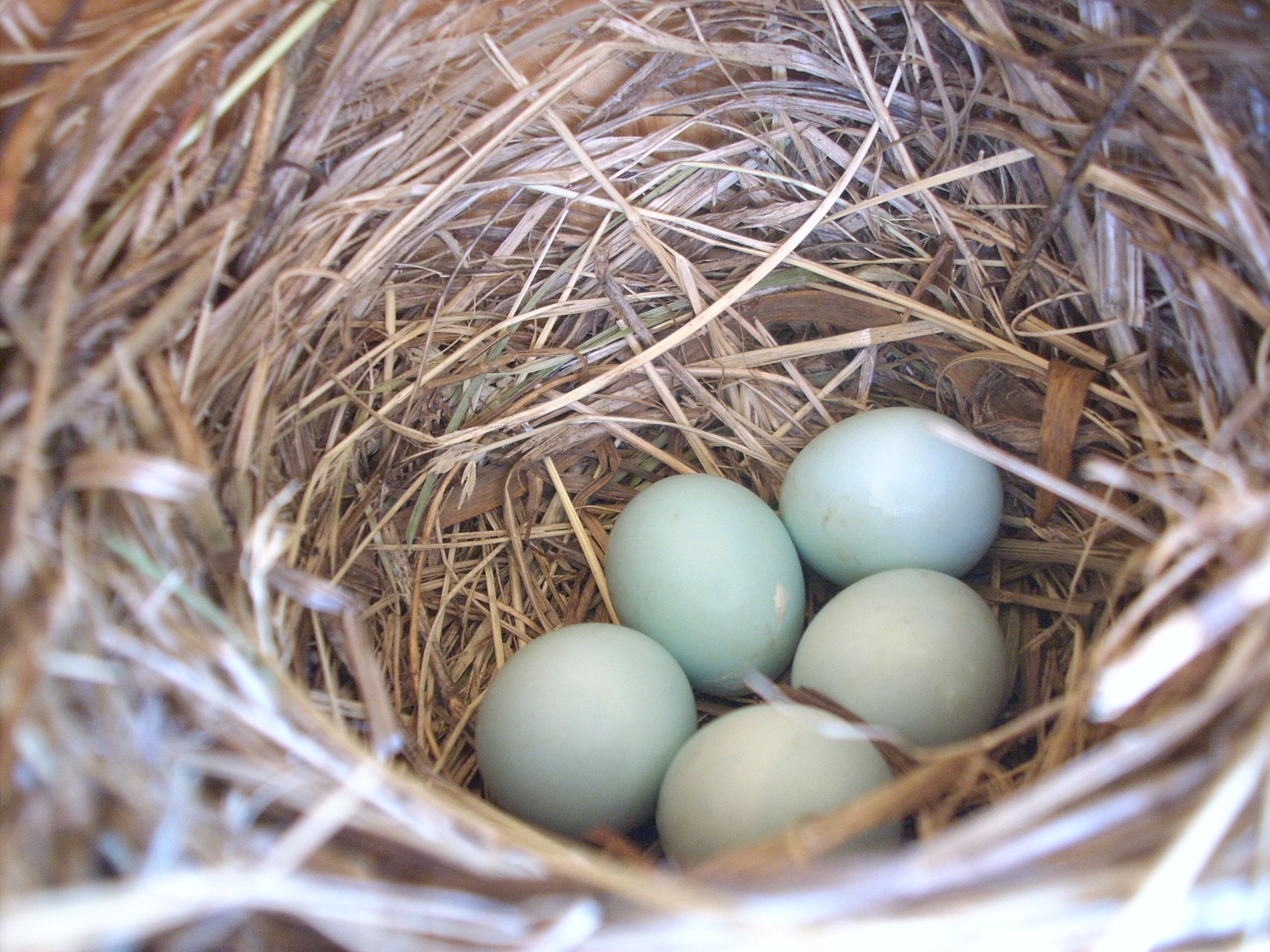 backyard birding inspire kids to be birders with the help of