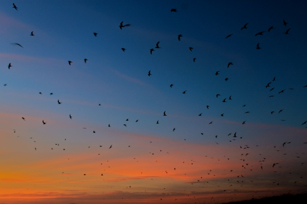 sunset terns.jpg