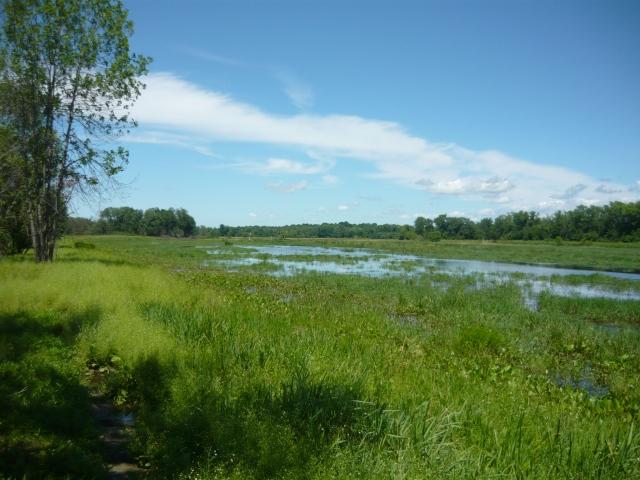 Wetland Restoration Site_leicester vermont_USFWS