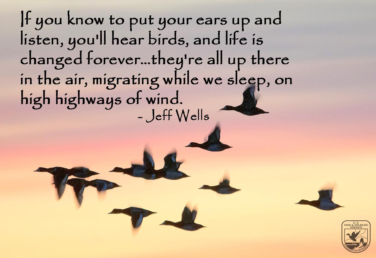 IMBD-Jeff Wells