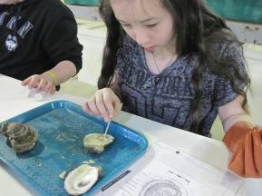 Learning about oyster biology