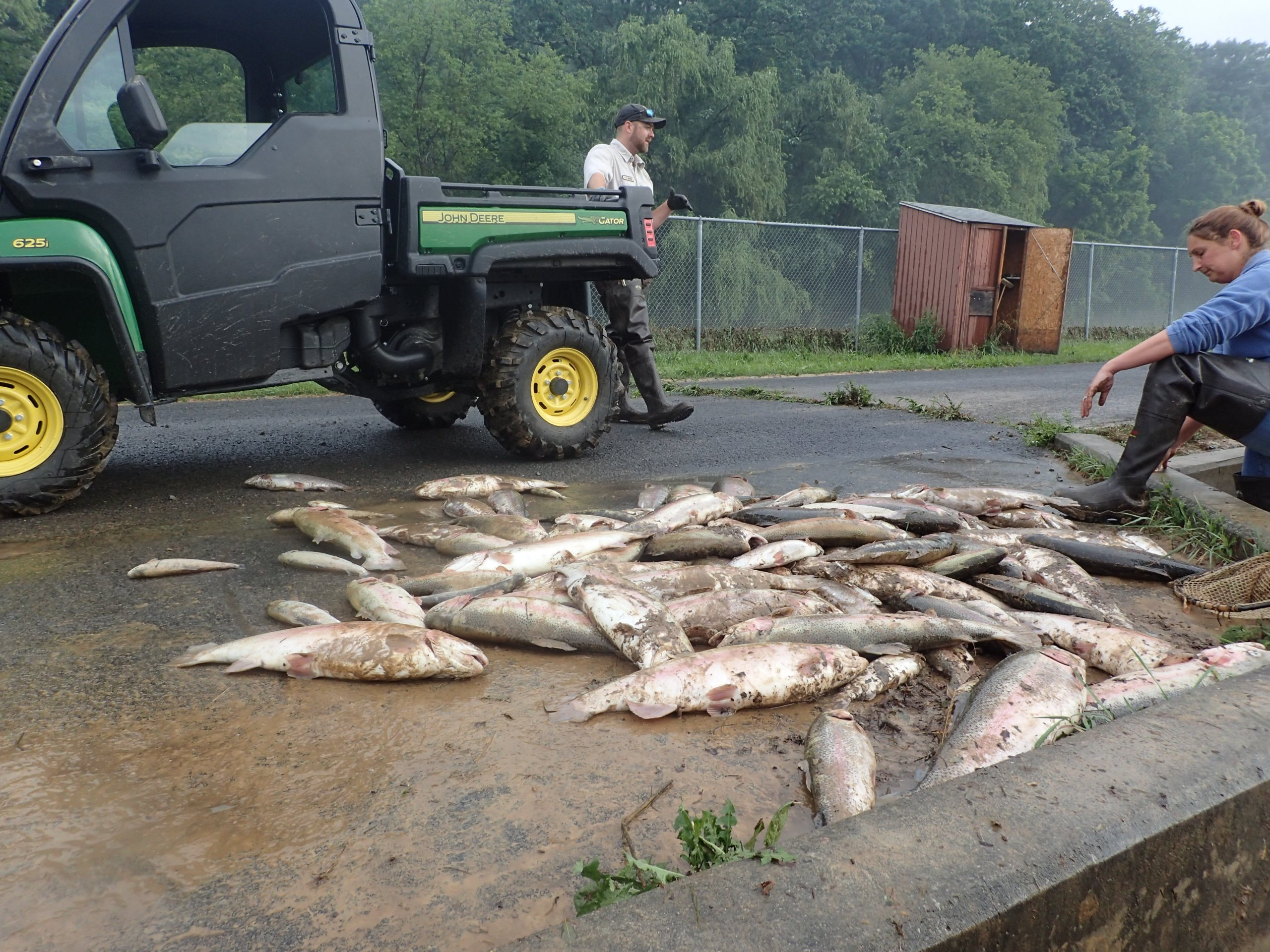Thousands of trout were carried out of the raceway