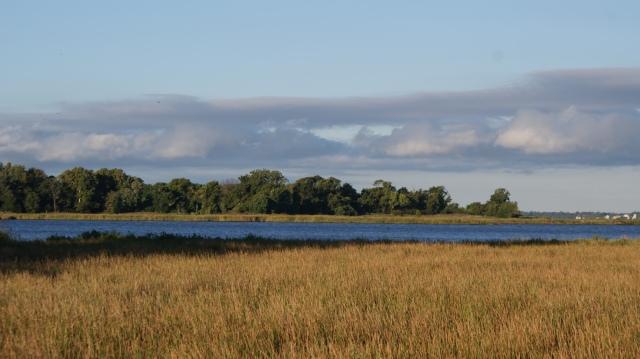 Smith island marsh