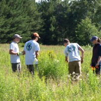 Youth Conservation Corps plant milkweed in woodcock habitat.