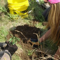 Youth Conservation Corps high school students prepare the land for milkweed planting.