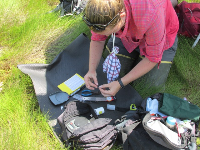 Bri measuring and tagging saltmarsh sparrows