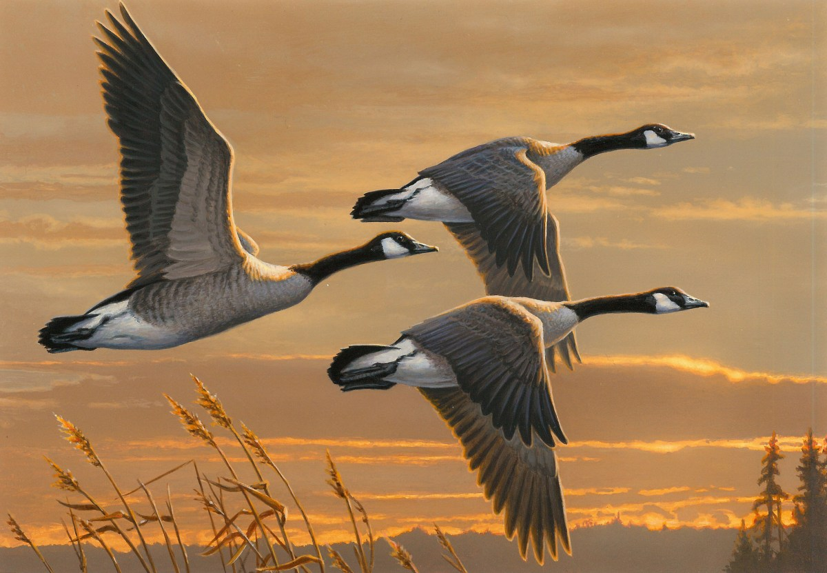 A History of the Federal Duck Stamp