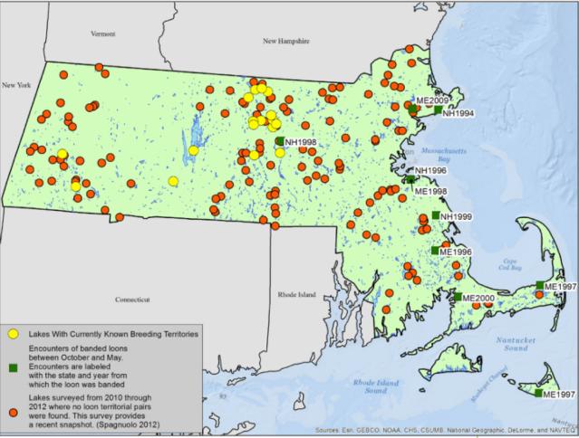 map-of-ma-loon-surveys-2010-2012