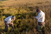 Biologists at Blackwater are using vegetation surveys to monitor the affects of shoreline elevation. Credit: Steve Droter