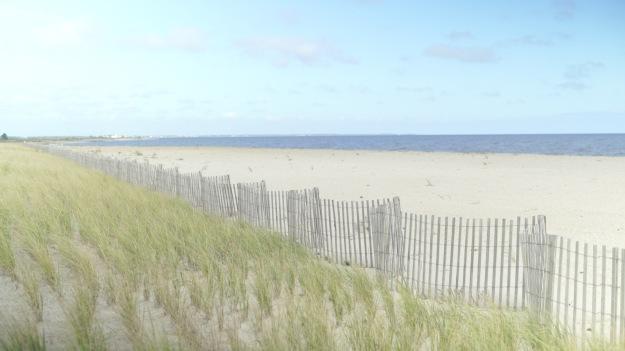 beach grass plantings Prime Hook
