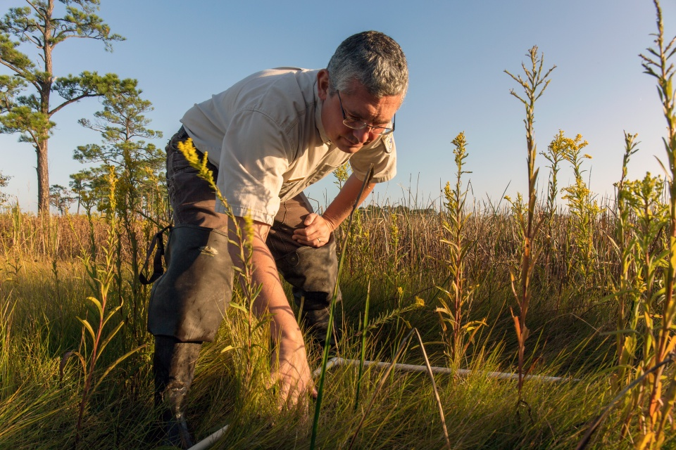Matt Whitbeck studies marsh grass at Blackwater NWR. Credit: Steve Droter
