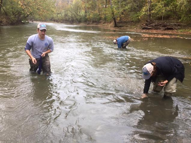 Salvaged mussels were then placed in safe habitat upstream from dam removal. Credit: Nick Millett/USFWS