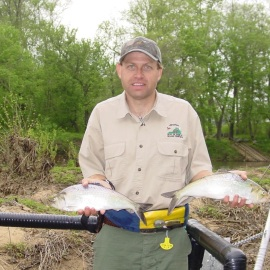 Alan Weaver, VDGIF, with American shad caught upstream in the Rappahannock River three years after the Embrey dam was removed. Credit: Chip Augustine, VDGIF.