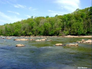 The Rappahanock River flows freely after being dammed for nearly 100 years. Credit: Alan Weaver, VDGIF
