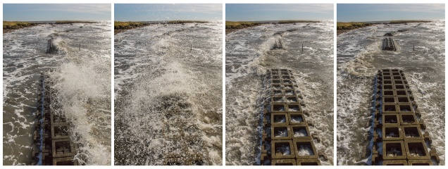 Oyster reef living shoreline Gandy's Beach