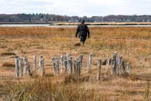 """Susan Adamowicz walks through the salt marsh beyond the remains of one of the refuge's many relic """"marsh hay"""" """"staddles,"""" or platforms."""