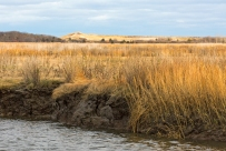 Monitoring erosion in the marsh is vital to understanding the way water and sediment move throughout Plum Island Sound. Scientists believe that marsh erosion is an integral part of a resilient marsh. In systems with low sediment supply, when sediment from these eroding banks gets deposited on the marsh surface, it will help marshes keep pace with sea-level rise.
