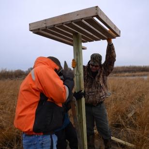 Osprey platform raising