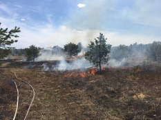 Prescribed fire has been conducted three times on the Concord State Military Reservation in New Hampshire in support of pine barrens habitat management. Photo courtesy of Arin Mills