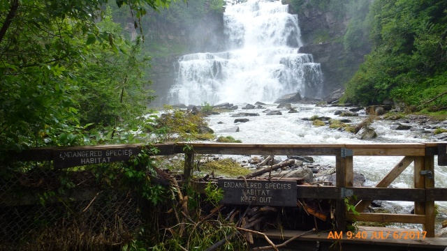 Falls with Endangered Spec signs