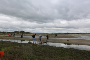 Volunteers from Schneider Electric, led by Save the Bay, plant native vegetation on recently created high salt marsh at Sachuest Point National Wildlife Refuge in Rhode Island. Credit: USFWS