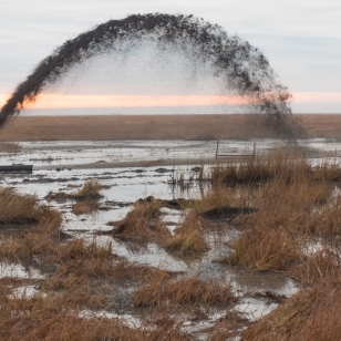 Sediment is sprayed onto a marsh at Blackwater National Wildlife Refuge to compensate for its natural tendency to sink and the effects of sea-level rise. Credit: Dave Harp, Chesapeake Photos