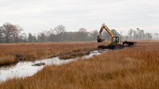 Sediment is dredged from one place in a salt marsh at Blackwater National Wildlife Refuge in Maryland, to be sprayed in another. Credit: Dave Harp, Chesapeake Photos