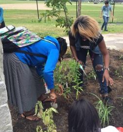 Students plant milkweed in Deering High School's new pollinator garden. Credit: Kirstin Underwood/USFWS