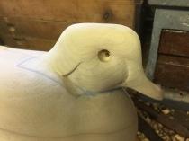 duckdecoy4