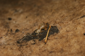 All that remains of a bat killed by white-nose syndrome. Credit: USFWS
