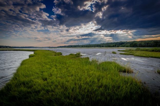salt marsh Chafee NWR