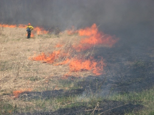 Controlled burn at Iroquois National Wildlife Refuge for grassland breeding birds