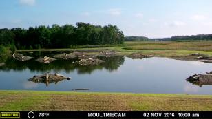 After shot of the restored wetland.