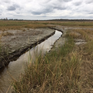 Following further study of the marsh's hydrology, the Service created another channel this past summer. Credit: USFWS