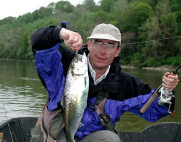 American shad caught on the Potomac River, Virginia. Credit_ Michael Bailey