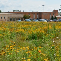 Shue-Medil Middle School in urban Newark went all in on habitat. Converting the two acres of mowed lawn in front of their school into a meadow. Here's pics from spring and fall of 2017 after a seeding. This school has been a great partner! Credit: Brian Marsh/USFWS