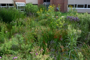 The Caesar Rodney High School rain garden is helping staff at the high school see the potential for schoolyard habitat, Credit: Brian Marsh/USFWS