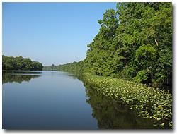 Pocomoke State Forest - Pocomoke River