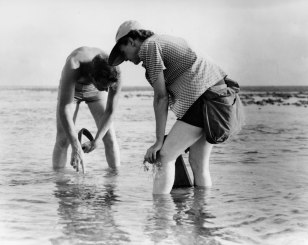 Rachel Carson conducts marine biological research in 1952. (Credit: USFWS)