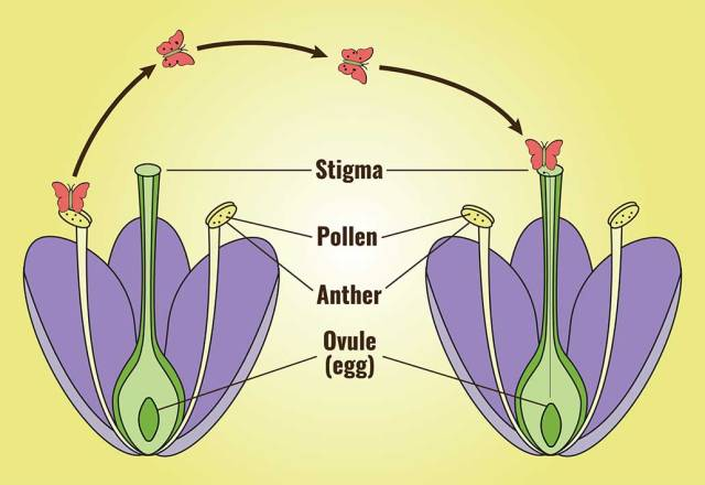 pollination-diagram-2