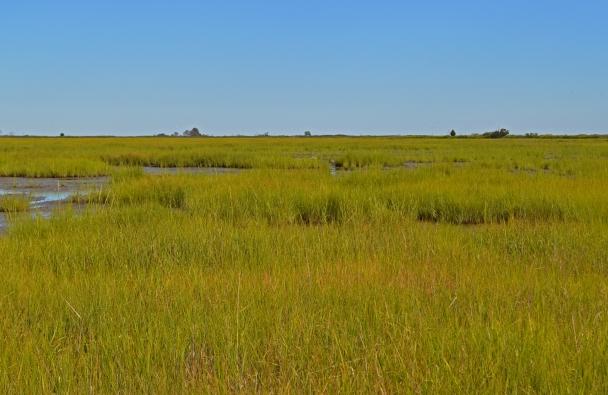 back barrier salt marsh at Prime Hook_usfws_flickr_2013