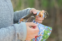 Bird ready for release