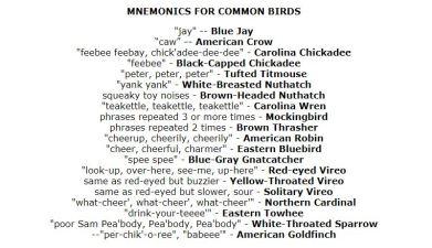 Mnemonics of common birds, screen capture provided by fernbank.edu