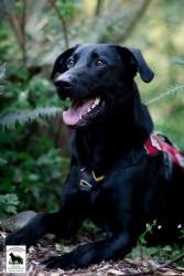 Conservation canine Ranger. Photo by Jaymi Heimbuch